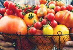 7 alimentos desintoxicantes que você deve comer todos os dias