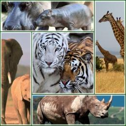 Como seria o mundo dos grandes mamíferos sem o ser humano?