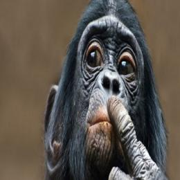 Chimpanzés estratégicos