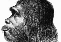 Por que só o Homo sapiens sobreviveu?