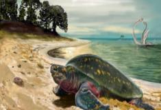 As primeiras tartarugas marinhas