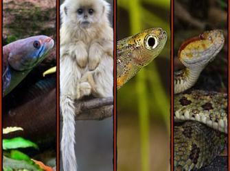 Novas espécies: World wildlife fund (WWF)