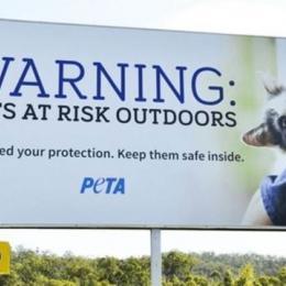 A cidade na Nova Zelândia que debate banir todos os gatos
