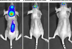 Vírus da Zika pode dar origem a tratamento para tumores de cérebro