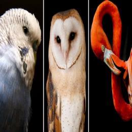 Uma nova compreensão das aves e da sua árvore da vida