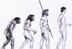 A Evolução Humana