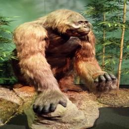 Gigantopithecus: pode ter sido extinto pelo seu grande tamanho