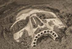 19 Curiosidades sobre a extinção