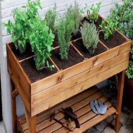 Uma horta em casa