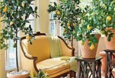 Miniárvores frutíferas