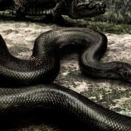 Fotos e perfis de cobras pré-históricas