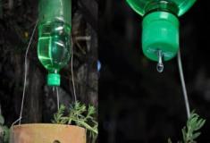 Gotejador para plantas