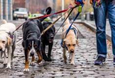 Conheça 10 trabalhos bem pagos para cuidar de animais