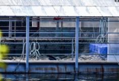 Prisão de baleias decoberta na Russia