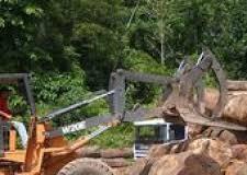Desmatamento na Amazônia aumenta 13% em um ano