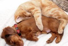 20 amizades entre animais que vão derreter o seu coração