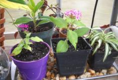 5 maneiras fáceis de regar suas plantas enquanto estiver de férias