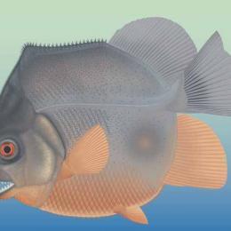 Mares aterrorizados por super piranhas