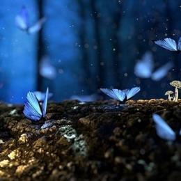 Os 5 sonhos mais comuns e seus significado