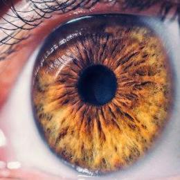 O que seus olhos estão tentando lhe dizer sobre sua saúde?