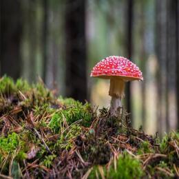 Cogumelos: seres vivos bem diferentes