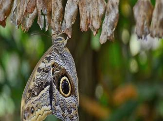 Metamorfose: Magia ou maravilha da natureza?