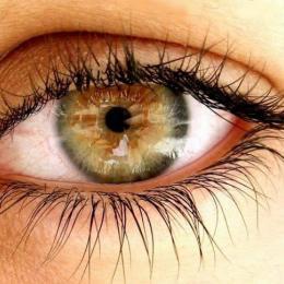 Saúde dos Olhos: Como prevenir doenças como a Cegueira?