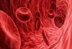O plasma sanguíneo