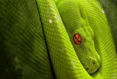 Características surpreendentes das serpentes