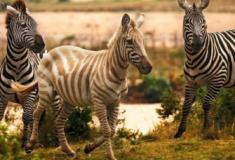10 animais raríssimos que em breve serão extintos do mundo