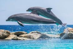 Experiências do Governo com Golfinhos