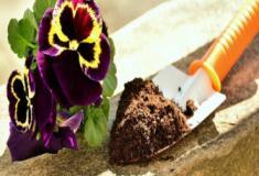 Como saber se sua planta está precisando de algum nutriente?