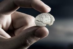 Mini cérebro artificial já existe e é poderoso