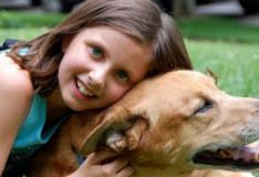 Por que você deve obter um animal de estimação?