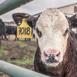 Agricultura e pecuária emitem mais gases efeito estufa que a produção de energia