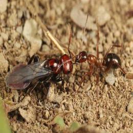 Instinto escravizador: descubra o mundo secreto das formigas