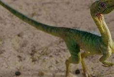 Traços de pele de dinossauro