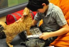 Crianças, livros, gatos e ressocialização