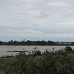 Cientistas encontram cocaína em camarões nos rios Suffolk
