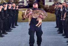 Assim são enterrados os cachorros policiais nos Estados Unidos