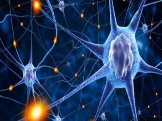 O início da ciência da neurologia
