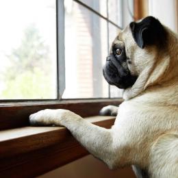 Cachorros sentem o tempo passar?