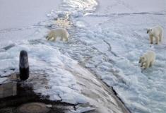 Cientistas de Cambridge querem voltar a arrefecer os polos norte e sul