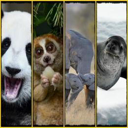 10 animais fofos que podem matar você