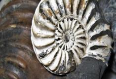 O que é um fóssil e como são formados?