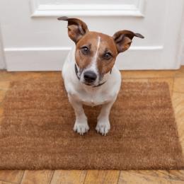 O que devo saber antes de ter um cachorro em um apartamento?