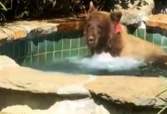Até urso nos Estados Unidos tem dia oficial da gandaia