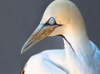 Aves marinhas e suas glândulas especiais