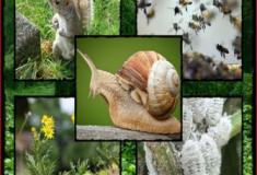 A ameaça das espécies exóticas