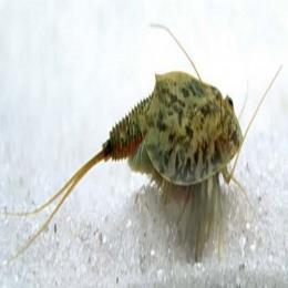 Uma pequena tartaruguinha